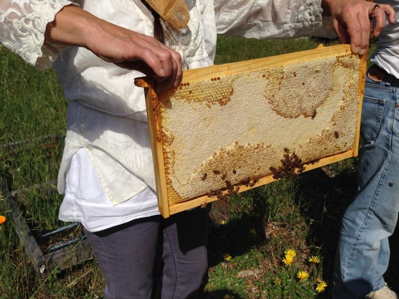 A frame full of honey!